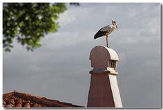 A Chaminé Algarvia: Ocupada  -  projectando o ninho...