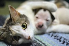 Mother cat nurses puppy to health, wins $25,000 for Cleveland APL: Animals in the News | cleveland.com