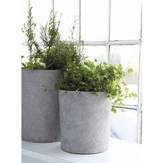 Enormous Ave Concrete Planters by Housedoctor are great for holding beautiful architectural plants. Made from concrete and resin. Material: Concrete mix with resin.