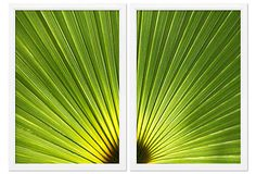 One Kings Lane - A Taste of the Tropics - Ben Wood, Temperate Leaf Diptych
