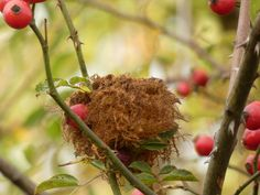 Home Wall Decor, Wren, Autumn Home, Color Change, Fruit, Rose, Fall, Nature, Prints