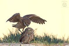 """""""Get off my back!!"""" by mlorenz via http://ift.tt/2pcPqrH"""