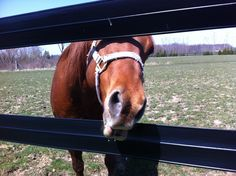 """Love horses - """"Fence toll, one apple please! Horse Fencing, Fence, Creatures, Horses, Apple, Animals, Animales, Horse Fence, Animaux"""