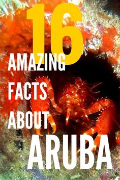 Click through to read why Aruba is so much more than just gorgeous beaches. Discover 16 facts about Aruba that will make you feel in awe about this paradise island. Oh, if you plan to gamble there...they don't tax your winnings.