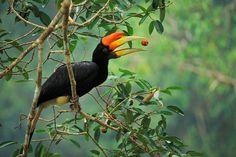 tim laman bird