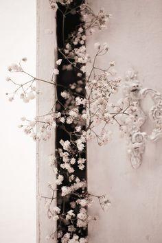 White Cherry Blossom in Bloom · Free Stock Photo Cherry Blooms, White Cherry Blossom, New Live Wallpaper, Mobile Wallpaper, Lightroom, Live Backgrounds, White Cherries, Flower Wallpaper, Wallpaper Wedding