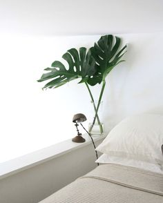 Splitleaf Philodendron: Temporary Houseplants for the Commitment-Phobe: Gardenista