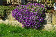 Koje cveće možete da posadite da ukrasite baštenske zidiće