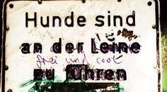 10 Gründe, warum ein Hundeleben in Berlin immer noch besser ist, als deins -  http://www.berliner-buzz.de/10-gruende-warum-ein-hundeleben-in-berlin-immer-noch-besser-ist-als-deins/