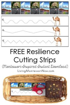 These free Montessori-inspired resilience cutting strips are an instant download with a variety of skill levels; scissor cutting practice for classroom or home! You'll get cutting strips with photographs of 2 resilient animals and 2 resilient plants and a second page with another resilient animal and more advanced cutting strips. They're perfect for a resilience (growth mindset) theme - Living Montessori Now