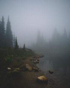 """""""A foggy morning hike through Mt. Glad to get out here again as the seasons change, and…"""" Foggy Forest, Dark Forest, Beautiful World, Beautiful Places, Landscape Photography, Nature Photography, Foggy Mountains, Miro, Between Two Worlds"""