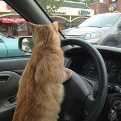 Drive cat, drive!