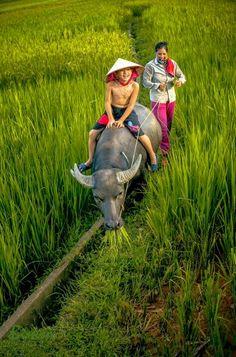 Chan Trau Vietnam