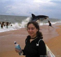 Le requin improbable | #Photobomb | #vacances |