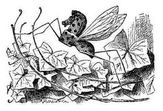 """Along with other #Tenniel #illustrations of flowers, nature ect…and with the quote """" It's no use going back to yesterday, because I was a different person then."""""""