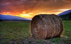 Lone Hay by Ron Worobec on Cute N Country, World Best Photos, Middle Earth, Planet Earth, Farm Life, Lonely, Planets, Beautiful Places, The Incredibles