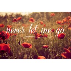 Never let me go - flowers photography warm red poppy photography... ($29) ❤ liked on Polyvore