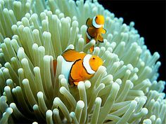 Quirky stories of the Great Barrier Reef #clownfish #greatbarrierreef #blog
