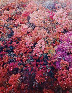 artruby:Thomas Struth, Paradise 26 (Bougainville), Palpa, Peru, (2003).