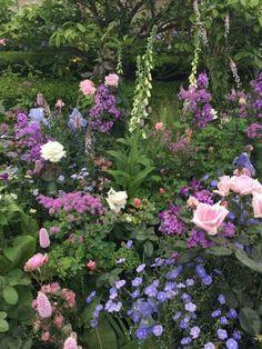 29 stunning small cottage garden ideas for backyard inspiration Small Cottage Garden Ideas, Cottage Garden Plants, Garden Shrubs, Backyard Cottage, Garden Edging, Garden Pests, Back Gardens, Small Gardens, English Garden Design