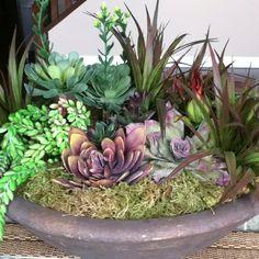 Care free plants... Love them