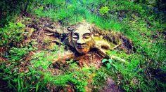 #Humble #face in the #woodland with a #cheeky #grin #carved #woodwork #uk #parks #walks #smile this #tree has #roots #people #green #colorful #eyesclosed #mind #open #workmanship #follow the #light de iangrahamnimr