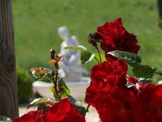Una passeggiata nel parco fiorito e panoramico dell'hotel romantico Taverna di Bibbiano per la vostra Luna di Miele in Toscana. Tra Colle di Val d'Elsa e San Gimignano, Siena.