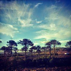 #araucania #icalma #ixregion #aracucania #araucarian #pehuen #emotionallandscapes #traveler #travelphotography #bymelinka