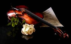 Gothic Rose Roses Sheet Music Strings Violin White (1680x1050 Pixel) Free Images Download #ID49968 (shared via SlingPic)