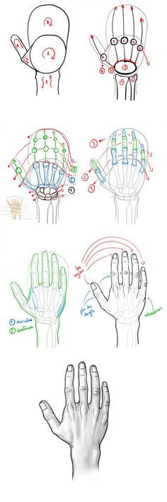 Tutoriel : dessiner la main en vue dorsale. anatomie de la main. Drawing tip : drawing hand. Hand anatomy