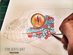 Progress 1 pic of my Tokay Gecko. Drawing with a Tombow Irojiten Colored Pencils