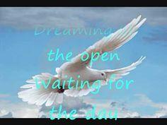 Skyline Pigeon With Lyrics.