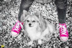 Hund, Teenager, Mädchen, Mensch und Hund, dog, Chihuahua, pink