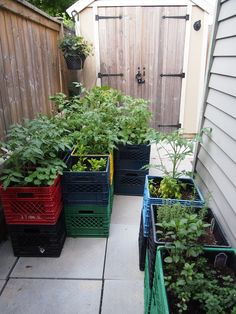 My 3x3 soon to be 4x4 milk crate garden I have a few recycle bins