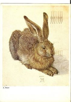 Young Hare, 1502, Watercolour and bodycolour (Albertina, Vienna).