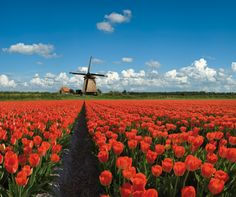 Netherlands countryside A gift to all the social media women  connected to my network.