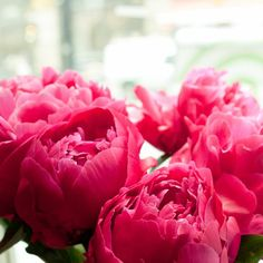 LOVELY bright pink peonies