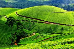 In the state of #Kerala, there are many hill stations which are enriched with eternal beauty of nature that can't be described orally. There are many attractive brooks, well-maintained tea shrubs, beautiful flora and fauna.