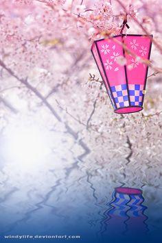 Japanese sakura lantern: photo by *WindyLife on deviantART