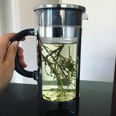 Desert sage tea from New Mexico  #wildHarvested #sage #health #herbaltea #beauty