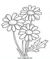 disegni_da_colorare_natura/fiore_fiori/margherita.JPG