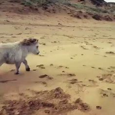 Run lil guy! http://ift.tt/2stl60I