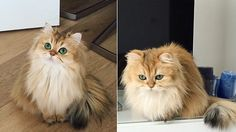 The adorable Smoothie the cat strikes a pose for her 135,000 Instagram followers