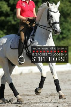Do you find that your horse often feels like he is bracing against you, rather than working with you? Does he struggle on one side more than the other? Stiffness is more common that we think; here are a few ideas on how to identify it and then helping y