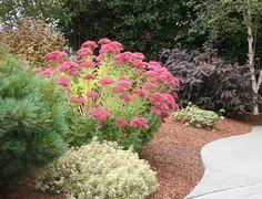 The 10 Best Plants for Your Pacific Northwest Garden Garden