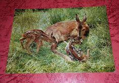 Wunderschöne alte Postkarte,Rehmutter mit neugeborenen Kitzen    Engadin Press,Nummer 26,Schweiz     Normalformat    Zustand,unbeschrieben,gut,siehe Fotos,    Farbabweichungen zum Original bedingt durch Fotografieren,evtl.farbige Streifen auf der Rückseite,bedingt durch Fotografieren,nicht auf der Postkarte     In meinen anderen Auktionen gibt es noch viel mehr Hunde, Tier, Pferde, Vogel Postkarten ,    Sammeln von Auktionen ist jederzeit möglich ( bitte kurz Bescheid geben ) I combine sh...