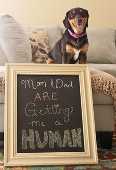 30 Fun Photo Ideas 30 Fun Photo Ideas to Announce a Pregnancy Babies R Us, Funny Babies, Little Babies, Fun Photo, Photo Ideas, Everything Baby, Baby Time, Baby Bumps, Baby Fever