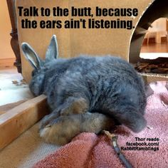 Guess I like to collect things. Here are some memes that have been found around the internet and perhaps been featured in a Rabbit Rambli. Bunny Paws, Cute Baby Bunnies, Funny Bunnies, Bunny Bunny, Dog Jokes, Funny Animal Jokes, Cute Funny Animals, Animal Memes, Funny Rabbit