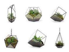 terrarium illustrations - Google Search