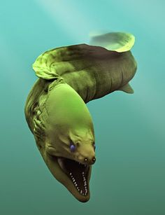 If you swim in the sea and bite an eel in your knee, it is a moray eel ! – Animals and pets – # bites Beautiful Sea Creatures, Deep Sea Creatures, Animals Beautiful, Deep Sea Animals, Underwater Creatures, Underwater Life, Underwater Animals, Fauna Marina, Wale